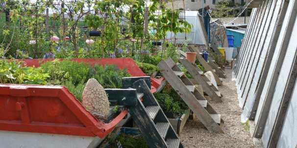 Food growing at the Skip Garden